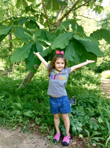 g and big leaves