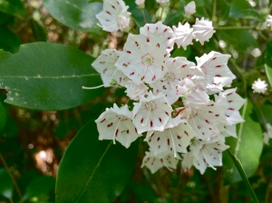 white speckled flowers